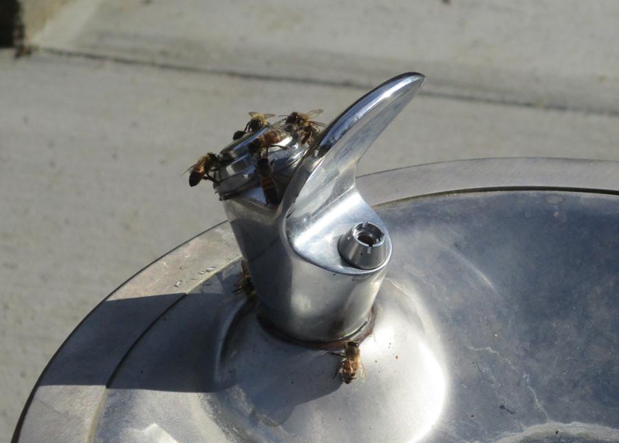 Fountain03